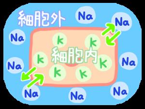 アカモク 先生・ナトカリ食