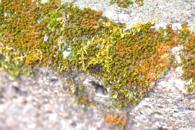 陸に生きる海藻類の仲間
